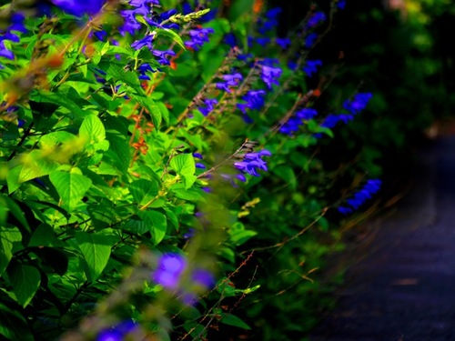 朝の花.jpg