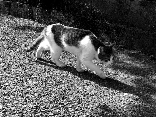 湯本の猫.jpg